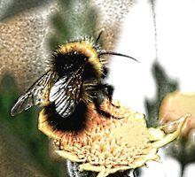 Bee utiful by shalisa