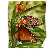 Butterflies in the Garden Poster