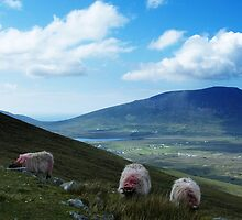 3 Sheeps To The Wind by Alan Ralph
