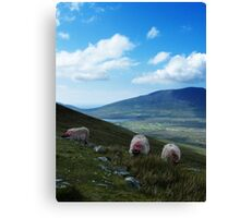 3 Sheeps To The Wind Canvas Print