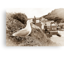 Port Isaac - Port Wenn Canvas Print
