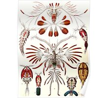 Plants & Animals, ocean, sea creature, Copepods, crabs, marine, psychedelic, art, illustration, haeckel,  Poster