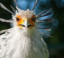 Secretary Bird by Thomas F. Gehrke