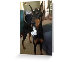 Funny Pet Greeting Card- Doberman Greeting Card