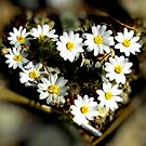 Heart of Nature by HeavenOnEarth