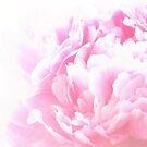 Pink Peony by shalisa