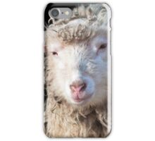 Domestic Sheep iPhone Case/Skin