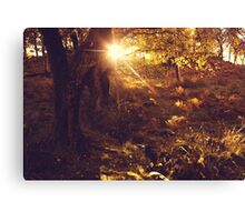 Sunlight Through the Forest Canvas Print