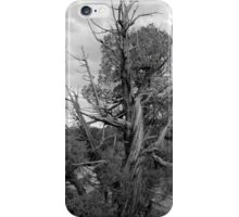 Old Tree 3 Colorado National Monument BW iPhone Case/Skin