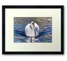 Mute Swan - Print Framed Print