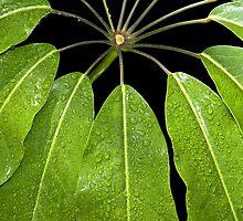 Green Cascade - Print by Mark Podger