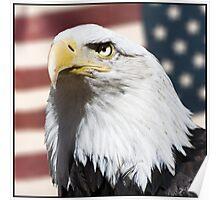 Patriot - Print Poster