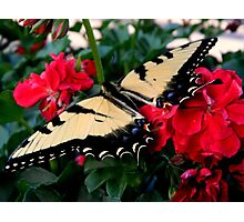 A Garden Guest   ^ Photographic Print