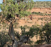 Tree 2 Colorado National Monument by marybedy