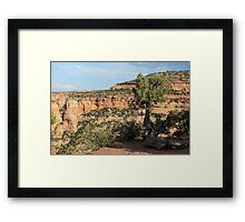 Tree 3 Colorado National Monument Framed Print