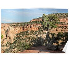Tree 3 Colorado National Monument Poster