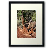 Tree 4 Colorado National Monument Framed Print