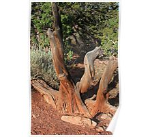 Tree 4 Colorado National Monument Poster