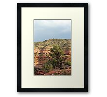 Tree Colorado National Monument Framed Print