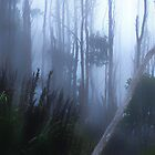 Mount Wellington.......Eucalyptus Forest by Imi Koetz