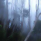 Mount Wellington.......Eucalyptus Forest by Imi Koetz