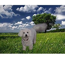 TAIL HIGH CLOUDS IN THE SKY I KNOW U SEE ME WALKING BY (CANINE-DOG) PICTRE/CARD//THROW PILLOW//& TOTE BAG Photographic Print