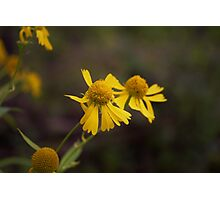 Autumn Yellow in the Woods Photographic Print