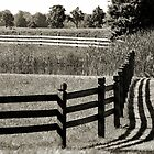 Lines and Shadows by Brian Gaynor