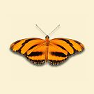 Banded Orange by Mark Podger