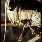 Locust, up close and personal by iamelmana