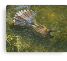 Water Turkey Canvas Print