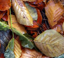 Autumn leaves by AWLPIX