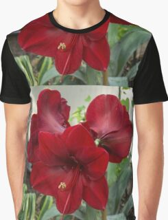Christmas Red Amaryllis Flowers Graphic T-Shirt