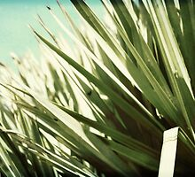 palm grass on dunes by SandyMoulder