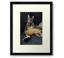 Portrait of a Distinguished Cat Framed Print