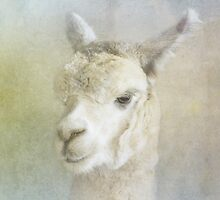 Alpaca by Jan Pudney