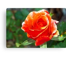 Riotous orange rose Canvas Print