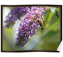 On a Snowberry Clearwing Day Poster