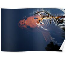 A Koi Fish For Luck Poster