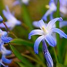 Blue Spring by Joy Fitzhorn