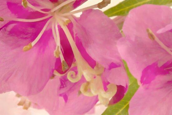 Fireweed Macro Digital Watercolor by Sandra Foster
