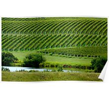 VIEW of the VINEYARD    ^ Poster
