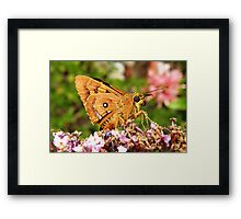 At Last! Framed Print
