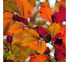 HERBST Photographic Print