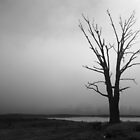 Tree in the Fog by Joel Bramley