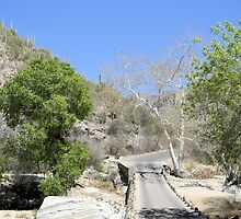 Sabino Canyon Road by Kathleen Brant