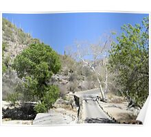 Sabino Canyon Road Poster