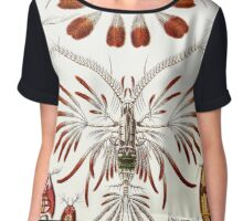Plants & Animals, ocean, sea creature, Copepods, crabs, marine, psychedelic, art, illustration, haeckel,  Chiffon Top