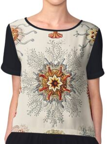 Plants & Animals, ocean, sea creature, jelly, jellyfish, medusa, marine, psychedelic, art, illustration, haeckel,  Chiffon Top