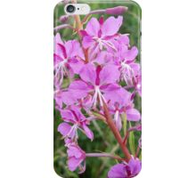 Pink Flower Stalk iPhone Case/Skin